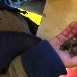 slakken vasthouden